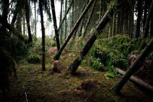 Langenberger Forst Sturm 01