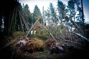 Langenberger Forst Sturm 02